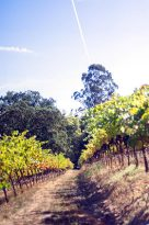 Hillside Winery Sevierville, Tn | Tennessee Wineries