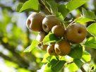 Apple Barn Winery Sevierville, Tn | Smoky Mountain Winery