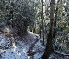 Best Winter Hikes In The Great Smoky Mountains