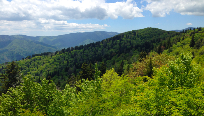 View From Mt. Cammerer