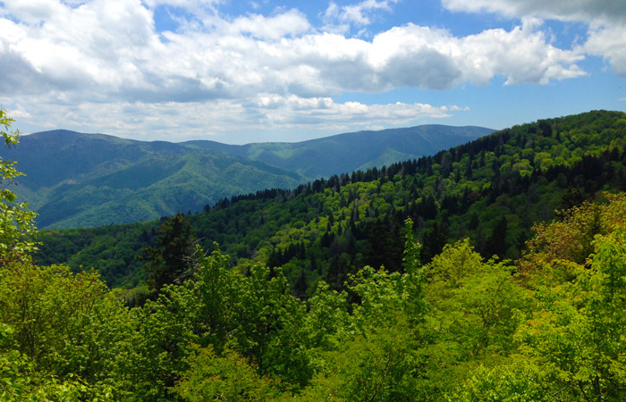 View of Forests From Mt. Cammerer in the Great Smoky Mountains