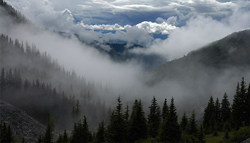 Spooky Mist in the Smoky Mountains