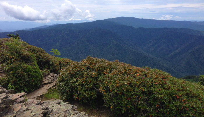 View From Mt. LeConte