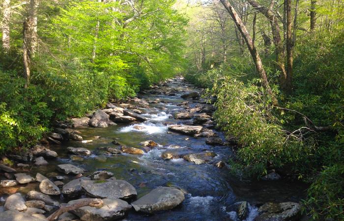 Alum Cave Creek in the Smokies