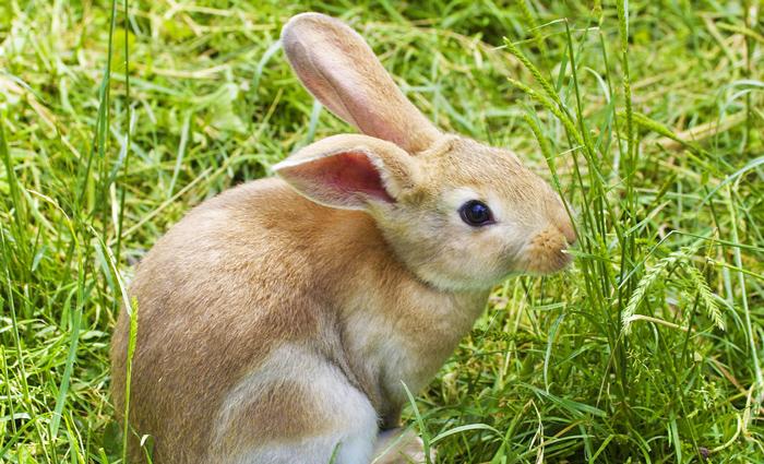 Bunny in a Field