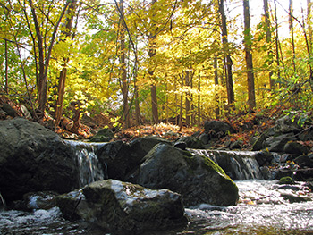 Enjoy fall in the Smokies